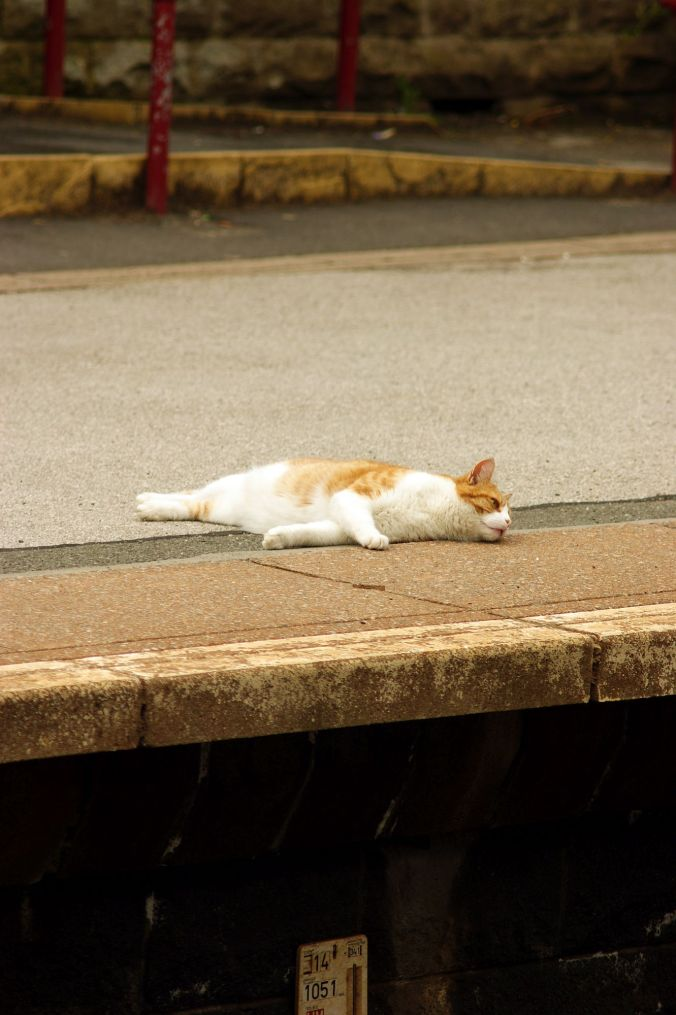 01/08/13 TODMORDEN. The station cat at Todmorden