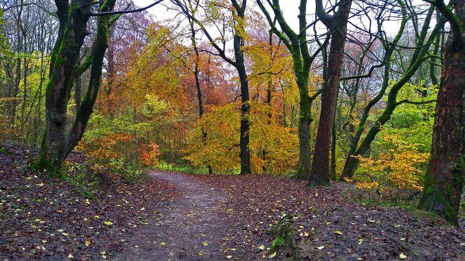 02/11/19 BUXTON. Grin Low Wood. Autumn Trees.