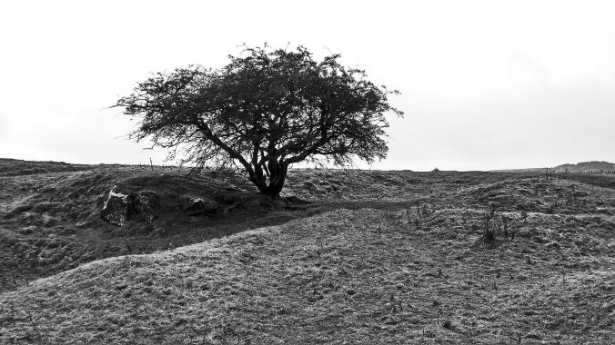 02/11/19 BUXTON. Grin Low. Lone Tree.